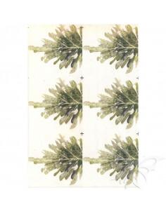Fommy Decò SOFT AGRIFOGLIO x6 talco cm.20x30