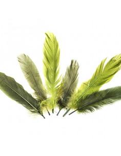Set 15 Penne naturali colorate, toni del verde