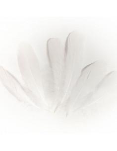 Set 15 Penne naturali colorate, bianche