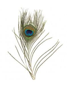 Penna di Pavone naturale